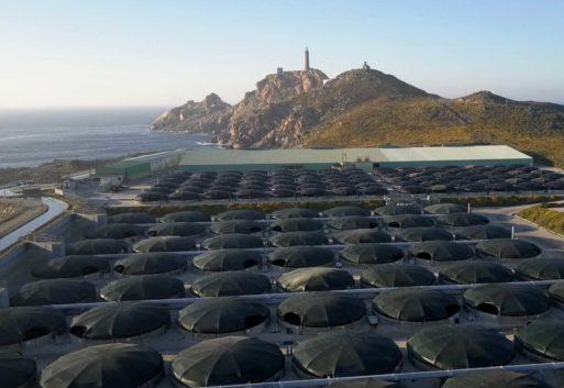 Trabajar la sostenibilidad en la acuicultura