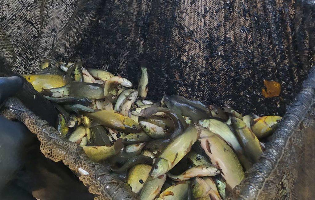 tencas de acuicultura