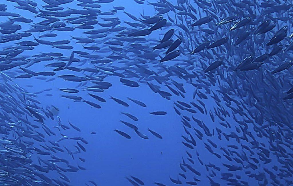 banco de peces de acuicultura española