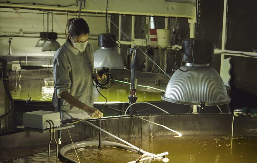 hatchery acuicultura