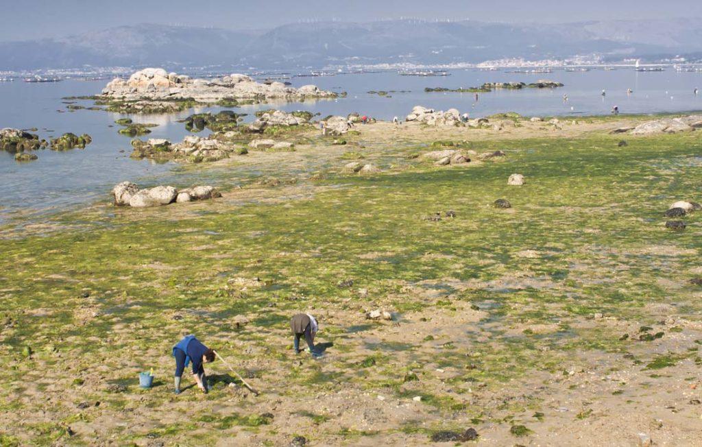 mariscadoras galicia acuicultura de españa